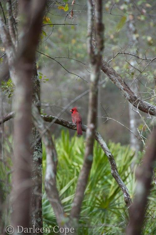 O'Leno State Park February 2015-13